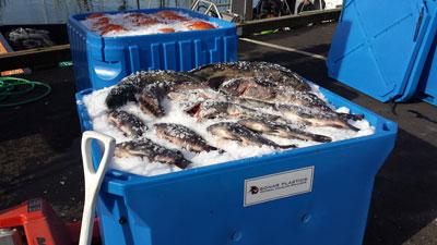 Bonar Insulated Fishing Boxes Bonar Plastics